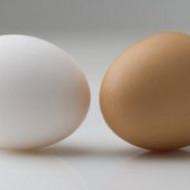 Куриные яйца делают детей умнее