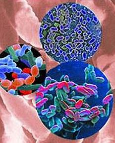патогенная флора при дисбактеризе