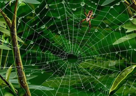 Новые органы можно «сплести», как паук плетет паутину