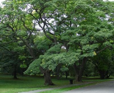 В пробковом дереве содержится лекарство от рака поджелудочной железы