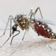 Противомалярийные препараты защищают от венерических инфекций