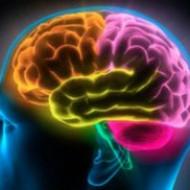 Выявлена способность кишечных бактерий проникать в мозг