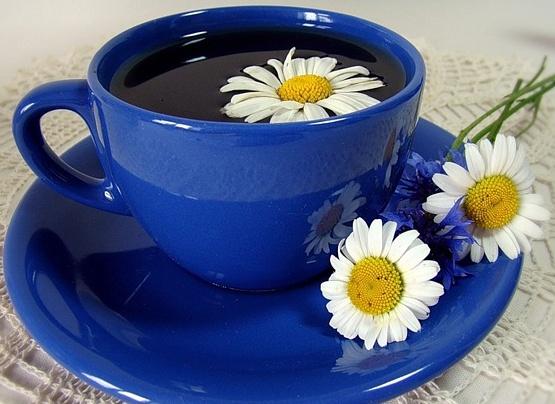 Обнаружены противораковые свойства ромашкового чая