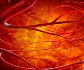 С помощью стволовых клеток можно выращивать кровеносные сосуды