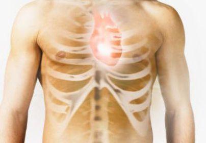 Биологи создали сердце-гибрид