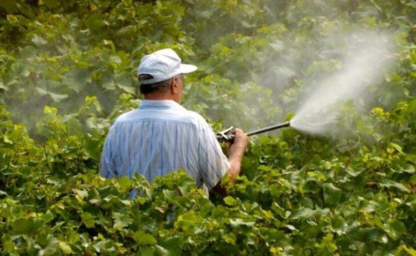 Пестициды способны провоцировать эндометриоз